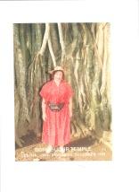 Burubudur Ficus secolare.tif